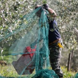 Blend Moschioni, esclusivo olio extravergine d'oliva delle colline cividalesi