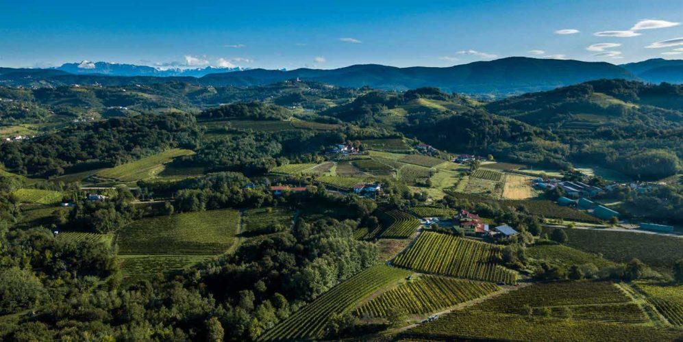 Contributi regionali per vitivinicoltura sostenibile