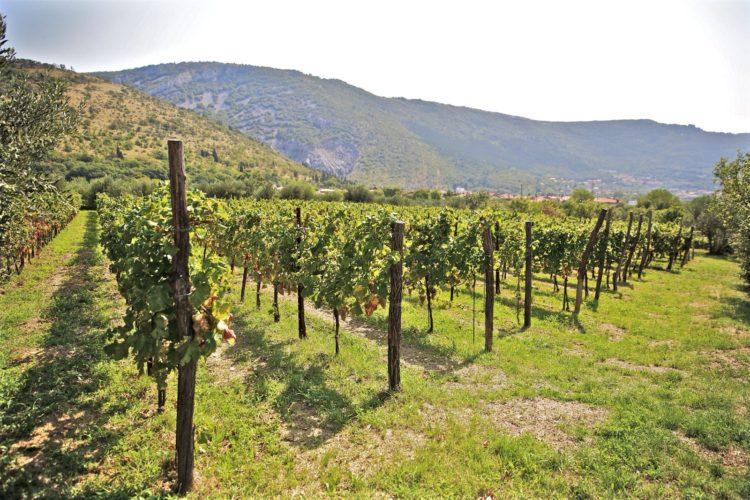Zahar, vini di qualità nella valle del Breg