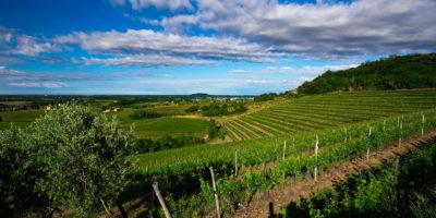 I vini dell'azienda Pighin sbarcano sul mercato israeliano
