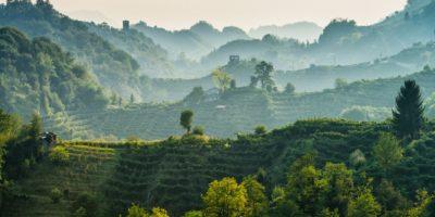 Le colline del Prosecco sono Patrimonio dell'Umanità Unesco