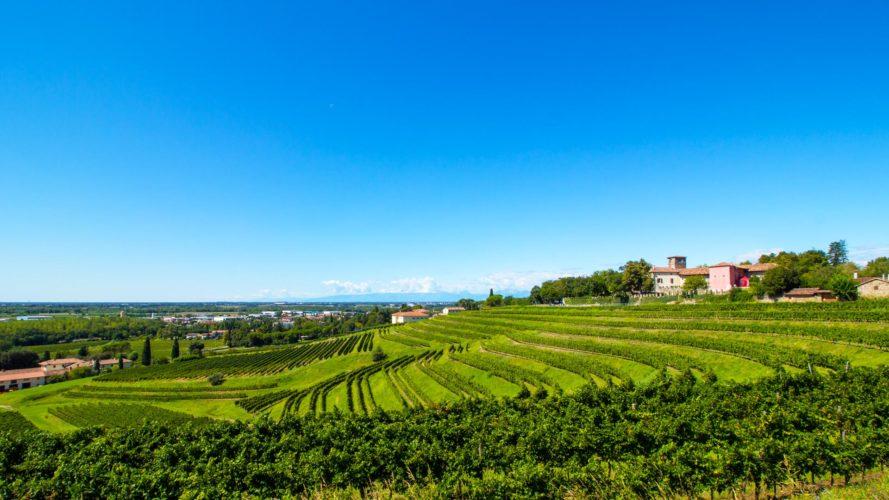 Consorzio tutela vini Friuli Colli Orientali Ramandolo verso il 50° con novità e idee per il futuro