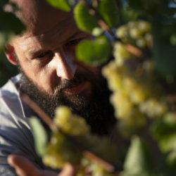 Bolzicco, la qualità dei vini friulani direttamente a casa vostra