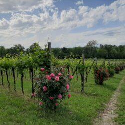 Il Nuovo Enoturismo in Friuli Venezia Giulia, una strategia per la ripartenza