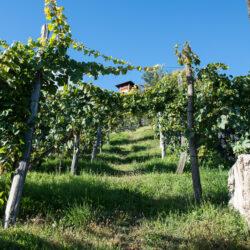 Vini Belluzzo, il vino come Tradizione e Cultura